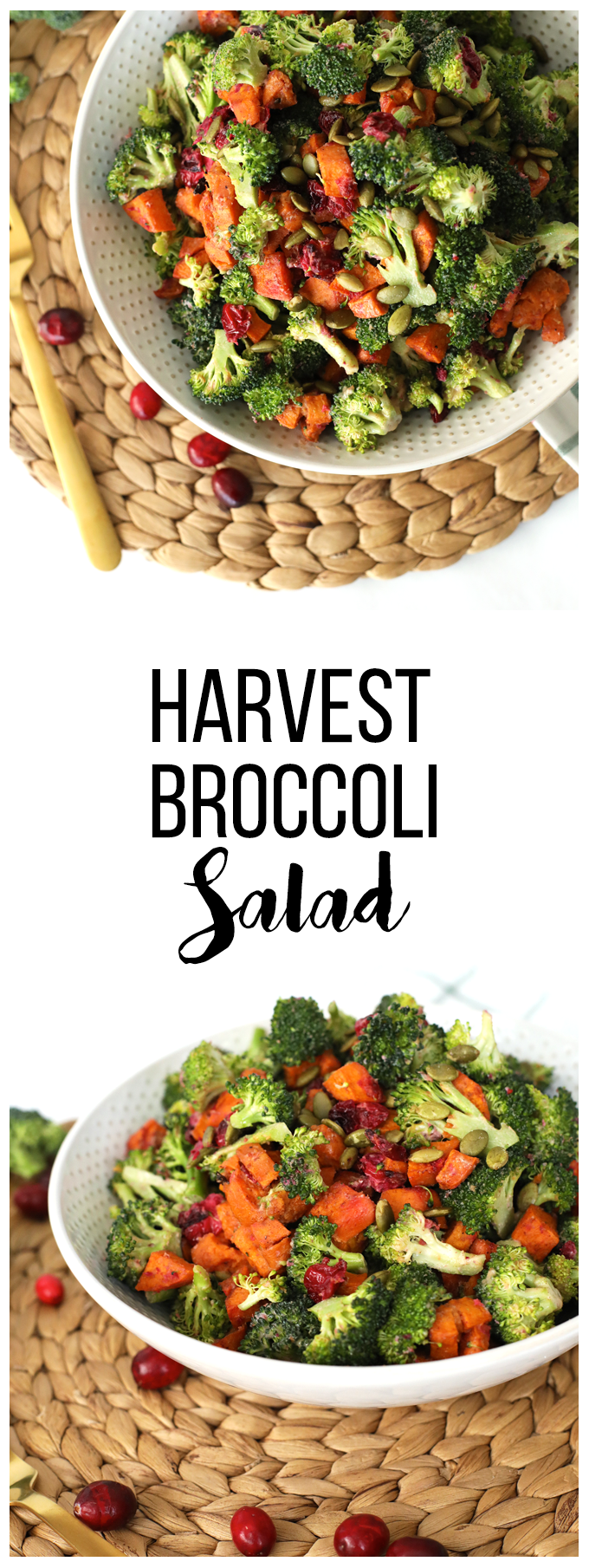 This Harvest Broccoli Salad is perfect for the holiday season! It is also a great thanksgiving side dish!